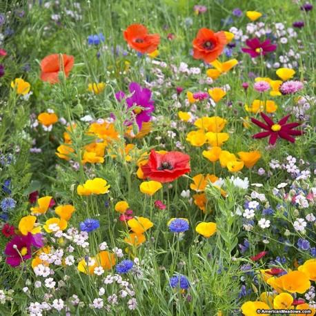 Essência de Flores Do Campo