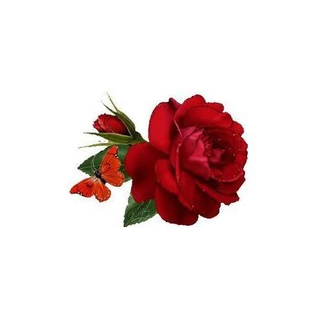 Essência Rosas Vermelhas