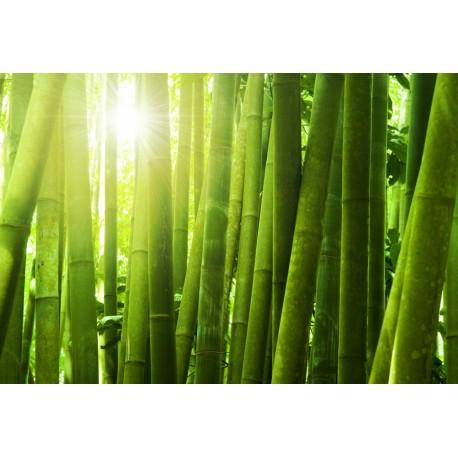 Essência Inspirada em Bamboo M Martan